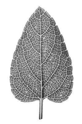 Photograph - Leaf by Jason Smith