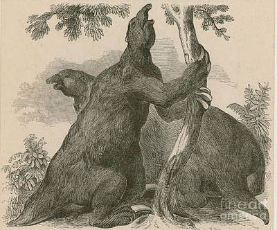 Megatherium, Cenozoic Mammal Art Print by Science Source