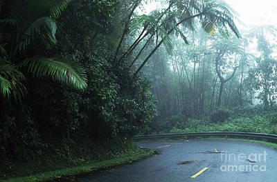 Misty Rainforest El Yunque Art Print by Thomas R Fletcher