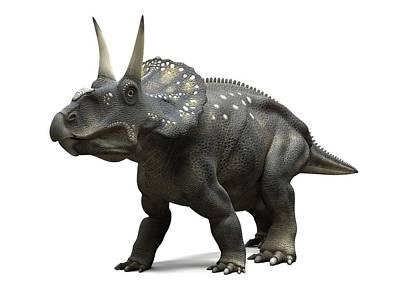 Nedoceratops Dinosaur, Artwork Art Print by Sciepro