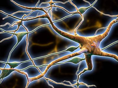 Nerve Cells, Computer Artwork Print by Pasieka