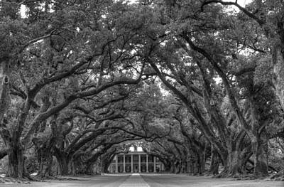Photograph - Oak Alley Plantation by Bourbon  Street