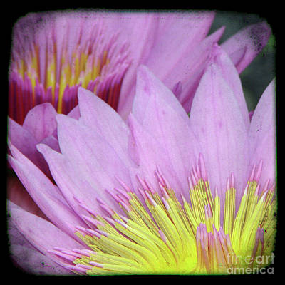 The View Mixed Media - Photography Floral Art  by Ricki Mountain