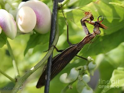 Photograph - Praying Mantis by J McCombie