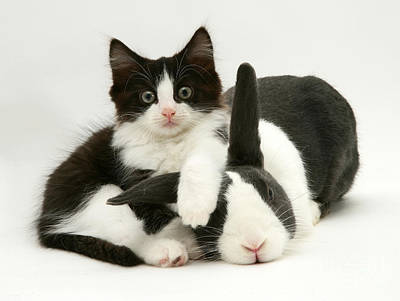 Photograph - Rabbit And Kitten by Jane Burton