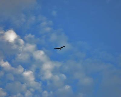 Photograph - 4- Seagull by Joseph Keane