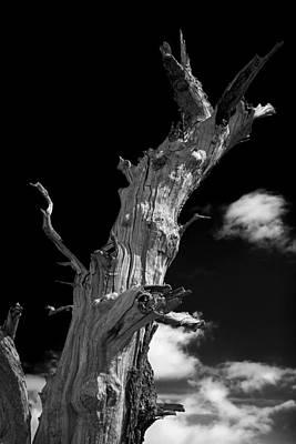 Tree Art Original