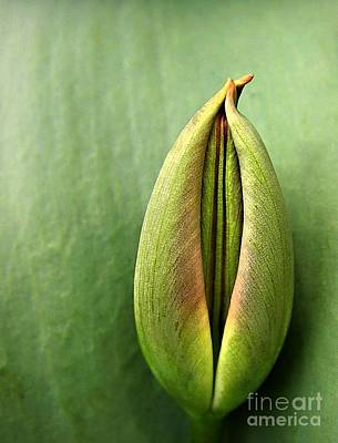 Sweating Photograph - Tulip by Odon Czintos