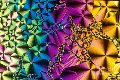 Photograph - Vitamin B1 Crystal by Michael W Davidson