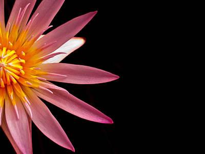 Water Lily Original by Joe Carini