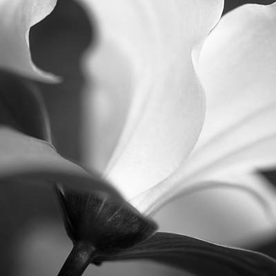 Lilies Photograph - Wild Trillium by The Trillium Guy