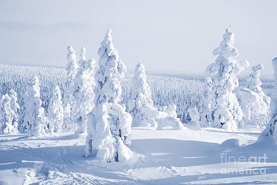 Christmas Holiday Scenery Photograph - Winter by Kati Molin