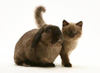 Photograph - Kitten And Rabbit by Jane Burton