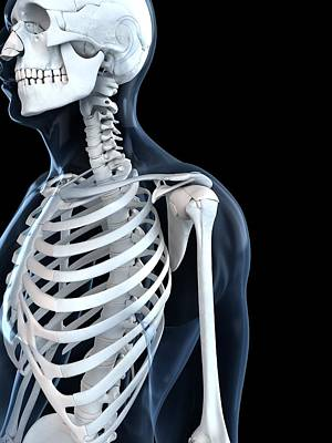 X-ray Image Digital Art - Upper Body Bones, Artwork by Sciepro