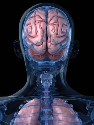 Human Joint Digital Art - Head Anatomy, Artwork by Sciepro