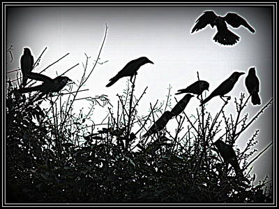 Landscapes Water Abstractions Inidian Saints Photograph - Crows Crows And Crows by Anand Swaroop Manchiraju