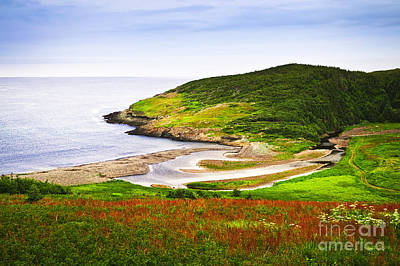Photograph - Atlantic Coast In Newfoundland by Elena Elisseeva