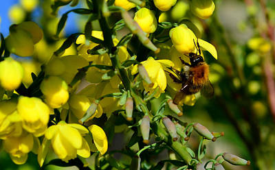Photograph - Busy Bee by Barbara Walsh