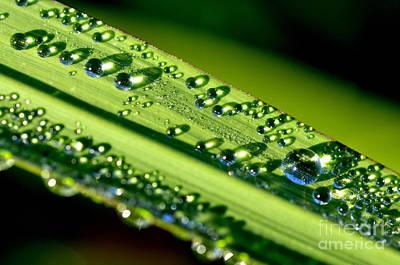 Dewdrops On Lemongrass Art Print by Thomas R Fletcher