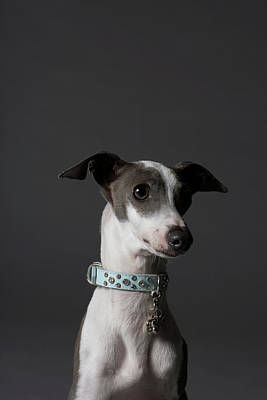 Greyhound Photograph - Dog Looking Away by Chris Amaral