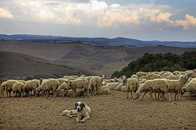 Cattle Dog Photograph - Flock Of Sheep by Joana Kruse