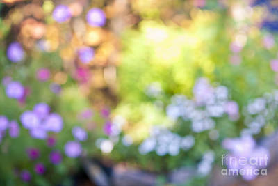 Blur Photograph - Flower Garden In Sunshine by Elena Elisseeva