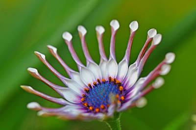 Photograph - Flower by Martina Niederhauser