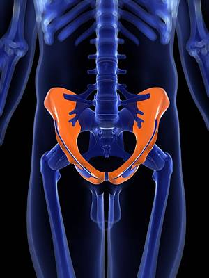 Human Joint Digital Art - Hip Bones, Artwork by Sciepro
