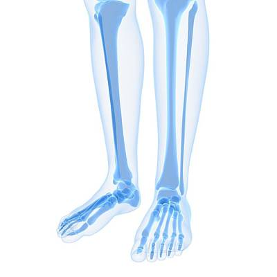 X-ray Image Digital Art - Leg Bones, Artwork by Sciepro