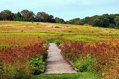 Photograph - Longwood Meadow by Harvey Barrison