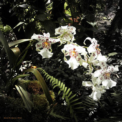 Photograph - Orchids by Gina De Gorna