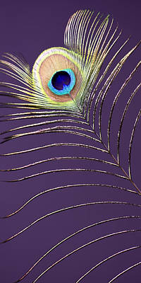 Peacock Feather Print by Falko Follert