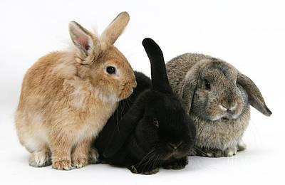 Rabbit Photograph - Rabbits by Mark Taylor