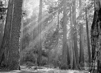 Photograph - Sequoia National Park by Granger