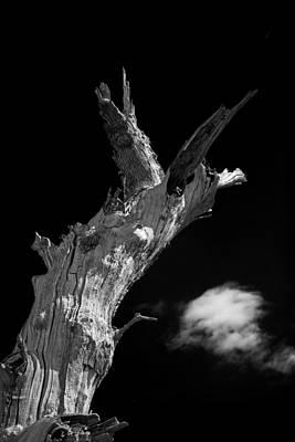 Tree Art Original by Lloyd Scott