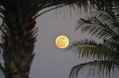 Photograph - 5- Tropical Moon by Joseph Keane