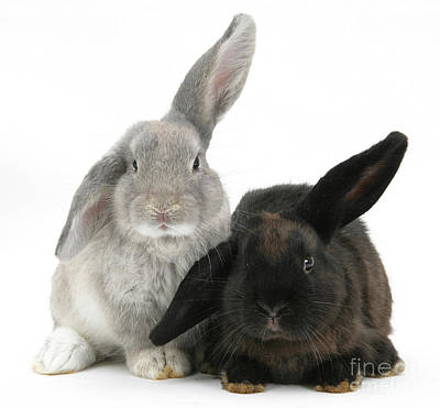 Photograph - Two Rabbits by Mark Taylor