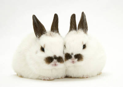 Photograph - Young Rabbits by Jane Burton