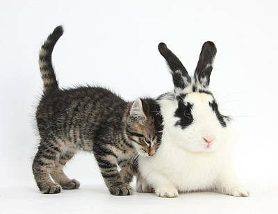 Kitten And Rabbit Art Print by Mark Taylor