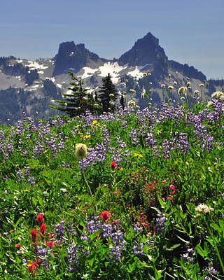 Photograph - #50 Wildflowers Below Myrtle Falls by Jack Moskovita