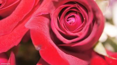 Rose For You Art Print by Gornganogphatchara Kalapun