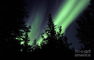 Yellowknife Photograph - Aurora Borealis Above The Trees by Jiri Hermann