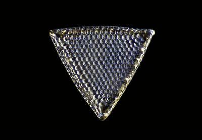 Diatom, Light Micrograph Art Print by Frank Fox