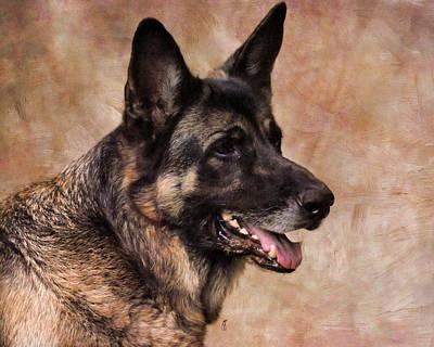 Herding Dog Photograph - German Shepherd by Jai Johnson
