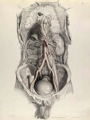 Photograph - Historical Anatomical Illustration by Science Source