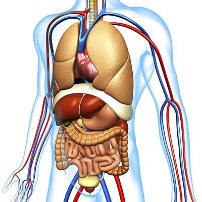 Human Anatomy, Artwork Art Print by Pasieka
