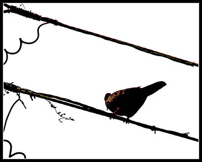 Photograph - Lonely Bird by Anand Swaroop Manchiraju