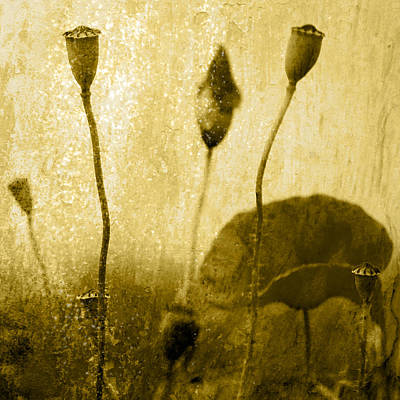Poppy Art Image Art Print by Falko Follert