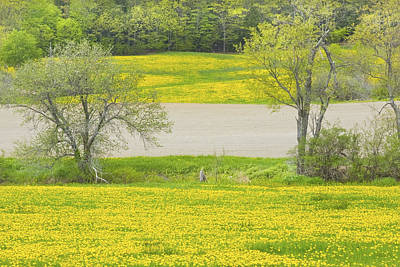 Photograph - Spring Farm Landscape With Dandelion Bloom In Maine by Keith Webber Jr