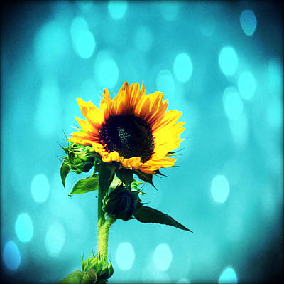 Sunflower Art Print by Cathie Tyler